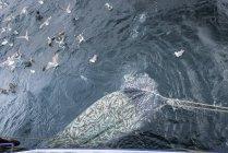 Red llena de peces Whiting, Merlangius merlangus, vista de ángulo alto de arrastre - foto de stock