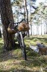 Велосипед с корзинами рядом с деревом — стоковое фото