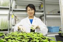Científica seleccionando muestra de planta en laboratorio de invernadero - foto de stock