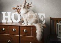 Ragdoll Katze auf Sideboard mit nach Hause Wortzeichen — Stockfoto
