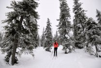 Young woman skiing in snow covered forest, Posio, Lapland, Finland — Stock Photo