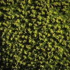 Top view of green plants, Nahuel Huapi National Park, Rio Negro, Argentina — Stockfoto