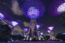 Purple Supertree Grove por la noche, Singapur, Sudeste Asiático - foto de stock