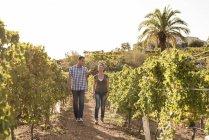 Viticoltori maschi e femmine che camminano in vigna, Las Palmas, Gran Canaria, Spagna — Foto stock