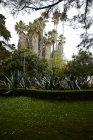 Vue panoramique sur le parc tranquille de Lisbonne, Portugal — Photo de stock