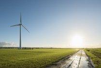 Windturbina em campo, Zeewolde, Flevoland, Holanda, Europa — Fotografia de Stock