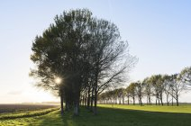 Route rurale bordée d'arbres, Zeewolde, Flevoland, Pays-Bas, Europe — Photo de stock