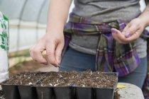 Куповані подання жінка посадки насіння кавуна в лотках насіння — стокове фото