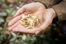 Mujer que sostiene la mezcla de nueces y frutos secos - foto de stock