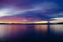 Tocos de madeira salientes da água ao pôr do sol, Bainbridge, Washington, Estados Unidos — Fotografia de Stock