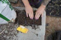 Обрезанный вид женщины, сажающей семена арбуза в подносы для семян — стоковое фото