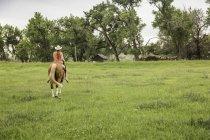 Вид сзади на молодую женщину, катающуюся без седла на лошади в поле ранчо, Бриджер, Монтана, США — стоковое фото