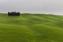 Ciprestes, perto de San Quirico d'Orcia, Val d'Orcia, província de Siena, Toscana, Itália — Fotografia de Stock