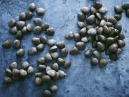 Clams on work surface, overhead view — Stock Photo