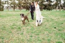 Ritratto di sposa e sposo con cani — Foto stock