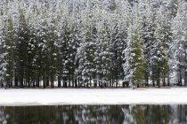 Río de Yellowstone en el invierno, Parque Nacional de Yellowstone, Wyoming, Estados Unidos - foto de stock