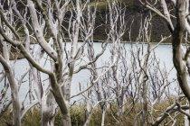 Vista elevada a través de árboles desnudos al lago, Parque Nacional Torres del Paine, Chile - foto de stock