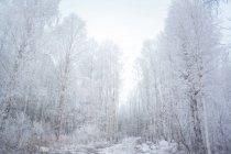 Snow covered forest, Ural, Sverdlovsk, Russia — Stock Photo