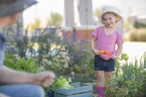 Père et fille dans le jardin cueillette de légumes — Photo de stock