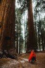 Hombre caminante envuelto en saco de dormir rojo en bosque, Parque Nacional Sequoia, California, Usa - foto de stock