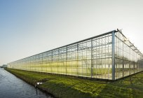 Greenhouse in Westland,  area with the highest concentration of greenhouses in Netherlands — Stock Photo