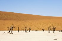 Alberi Morti, Deadvlei, Sossusvlei, Namib Naukluft Park, Namib Desert, Namibia — Foto stock