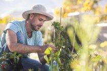 Junger Mann im Garten Pflanzen tendenziell — Stockfoto