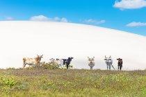 Корів Жерікоакоара Національний парк, Сеара, Бразилія, Південної Америки — стокове фото