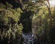 Paisaje de desfiladero forestal y río Azul, Cajón del Azul cerca de El Bolson, Patagonia, Argentina - foto de stock