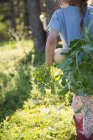 Menina na fazenda, segurando rabanete daikon recém-colhido, visão traseira — Fotografia de Stock