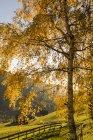 Feuilles d'automne sur arbre, Funes Valley, Dolomites, Alto Adige, Italie, Europe — Photo de stock