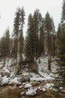 Vista posteriore del Viandante maschio che osserva sopra la foresta nevosa dalla roccia di fiume, Yosemite Village, California, Stati Uniti — Foto stock