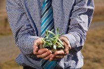 Mann im karierten Hemd mit grünem Spross — Stockfoto