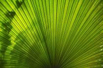 Солнечный свет и тени на зеленом листе пальмы, крупным планом — стоковое фото