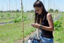 Молодая женщина на плантации Годжи смотрит на смартфон — стоковое фото