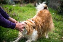 Человек, играющий с собакой на открытом воздухе — стоковое фото