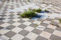 Green plants growing through tiled floor — Stock Photo