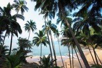 Пальмові дерева і пляжі Гоа, Індія — стокове фото