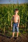 Portrait d'un garçon debout dans un champ de maïs — Photo de stock