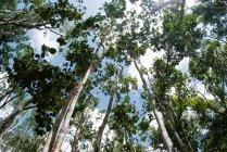 Vista de ângulo baixo de árvores contra o céu azul em tulum, México — Fotografia de Stock