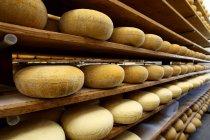 Sala de envelhecimento onde os queijos duros são armazenados para amadurecer — Fotografia de Stock
