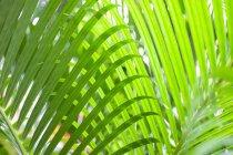 Зрения зеленых пальмовых листьев — стоковое фото