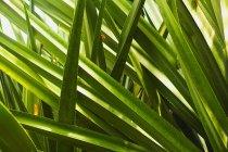 Крупный план зеленых листьев, полный кадр — стоковое фото