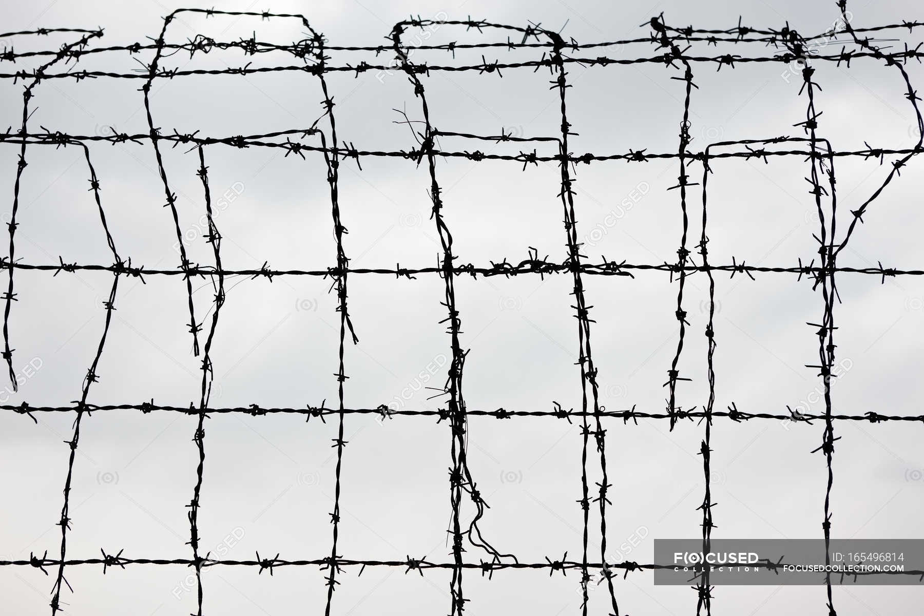 Barb wire - Stock Photos, Royalty Free Images | Focused
