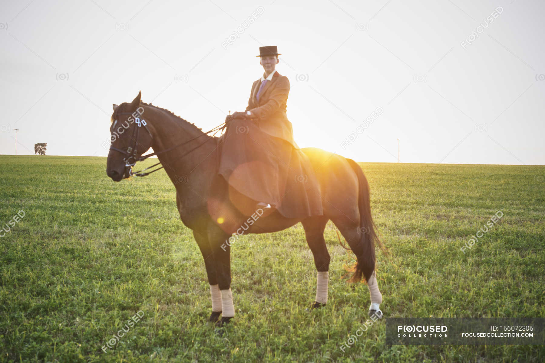 Portrait Of Dressage Horse And Rider Training In Field At Sunset Side Saddle Evening Stock Photo 166072306