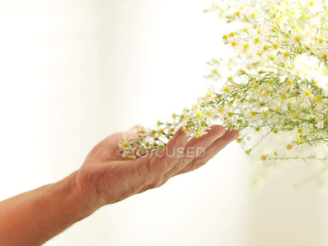 Hand touching yellow flowering plant — Stock Photo