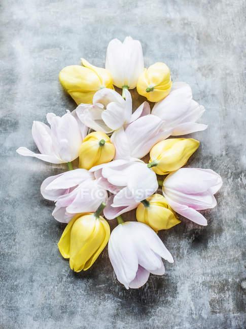 Geschnittene Tulpenköpfe — Stockfoto
