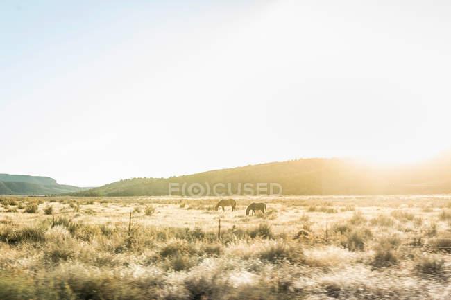 Cavalli al pascolo nel paesaggio illuminato dal sole — Foto stock