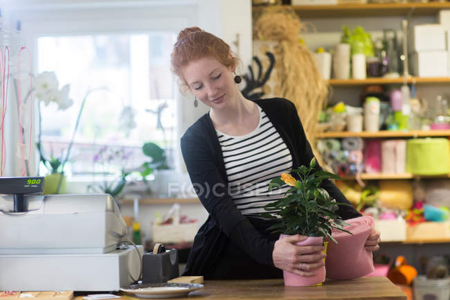 Florist working with potted plants in shop — Stock Photo