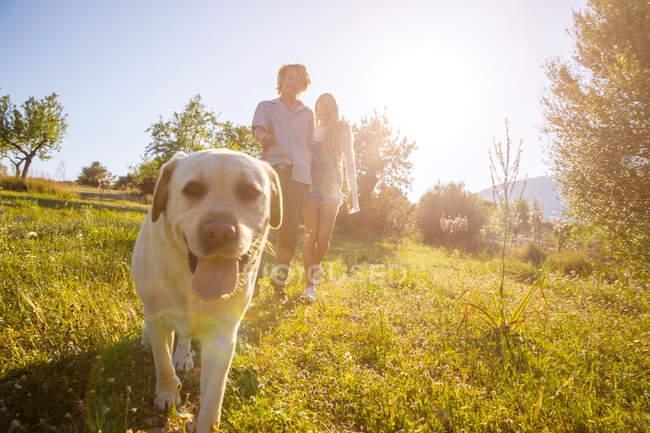 Pareja paseando perro en sunlit rural campo - foto de stock